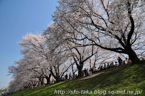 11041003淀川3 b.jpg