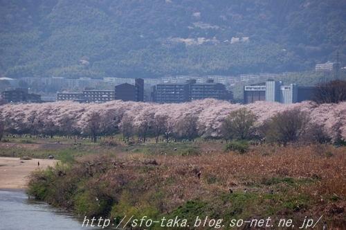 11041003淀川6 [].jpg