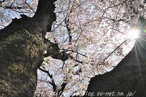 110410墨染寺2 [].jpg