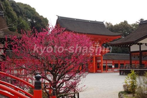 下鴨神社0702202.jpg